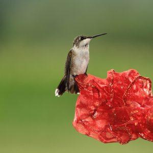 hocking-hills-hummingbird-viewing-cabins-sky-view-cabin